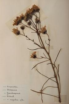 Herbarium T.Terpstra-Durksz