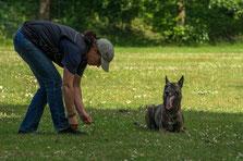 Jul.2015  --  ein Tag auf dem Hundeplatz