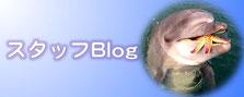 スタッフブログ 告知バナー