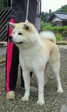 柚姫号直子 「藤雲号」 owner 岡林 秋生様