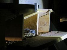Bei verunglückten jungen Mauerseglern ist es eine günstige Methode, sie in Nester mit gleichaltrigen Geschwistern zu setzen. Sie werden dann von Ammeneltern aufgezogen. Fotos: Hannes Berger