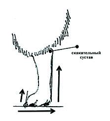 strizhka yaponskiy shpitz, grooming yaponskiy shpitz, shema strizhka yaponskiy shpitz, vestavochniy grooming yaponskiy shpitz, photo