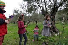 Unser Olivenhain im Frühling.
