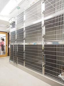 エルム動物病院 杉並区 ペットホテル 入院舎 犬舎 猫舎 大型犬