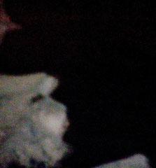 Un Urmah photographié la nuit