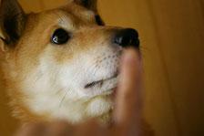 愛犬*静クン