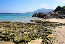 事例 徳之島