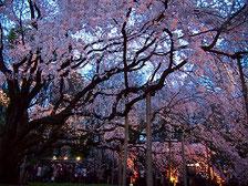 インバウンド 外国人に人気の花の観光