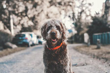 Le chien et le dressage en France