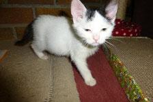 Ayla aus der Kleintierpraxis