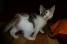 Sheela aus der Kleintierpraxis