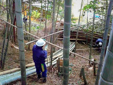 竹林整備風景