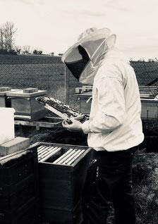 das erste Mal an den Bienen gearbeitet in 2018
