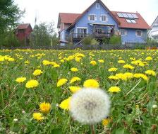 Blaues Haus im Löwenzahn-Feld