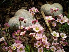 Zwei Herzen im Blumenbeet