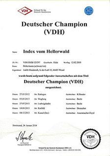Urkunde VDH-Champion