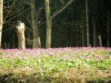 林間散策コース 21番