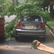 Russell Rd - Tree limb falls on car
