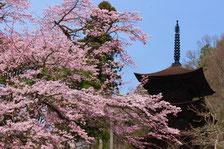 大法寺 御朱印 季節限定 桜