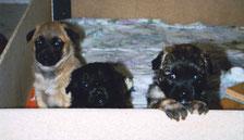 Falko, Cassy und Einstein