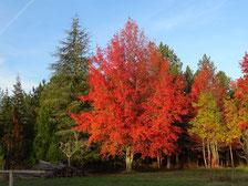 Forêt de la Bessède