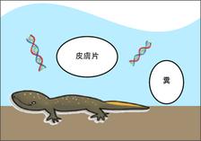 図4 環境DNA