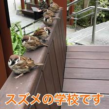 ◆ベンチでスズメと一緒に休憩◆