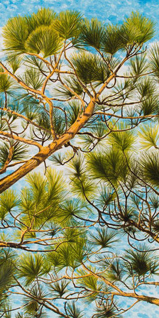 "Acrylic painting of Carolina blue clouds seen through the pines - ""Reaching"""