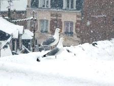Un aperçu de ce qui les attend à Deauville...