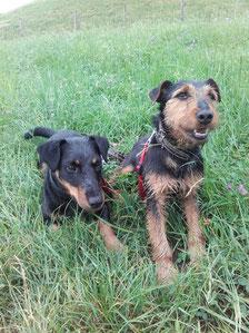 Paarungspartner Max und Una