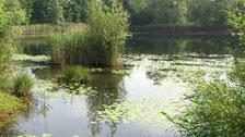 Der See in der LBV-Umweltstation