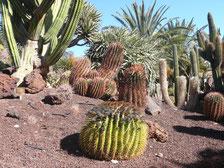 Oasis Park bei La Lajita
