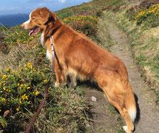 Tiergesundhalter Alter Hund Na Und Tierhomöopathie