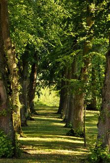 Le Parc - Domaine de l'Ermitage - Photo: Véronique Hadengue