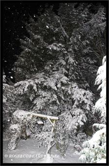 der nächtliche Garten im Schneefall
