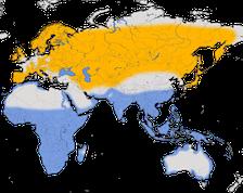 Karte zur Verbreitung des Flussuferläufers (Actitis hypoleucos)