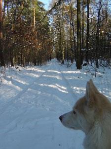 Waldweg in der Nähe