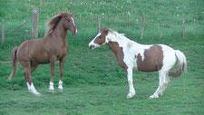 Comportements de chevaux