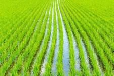 水稲育苗培土の写真