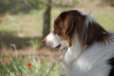 Thérapie canine