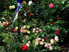 Blick in den Rosen-Garten