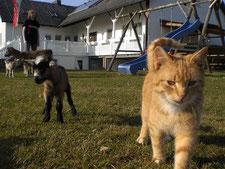 Garfield mit Babyziege Nelli
