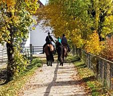 Begleitete Ausritte mit dem eigenen Pferd