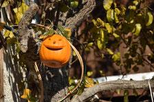 Ponyhoftag Halloween