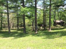 キャンプ地は気持ちの良い木陰で