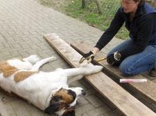 Clarissa Schallner baut die Hundehütte für Thomas