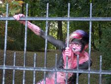 Ein Model bemalt als Katze in pink und schwarz-weiß posiert an einem schmiedeeisernen Tor.