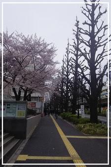 千駄ヶ谷駅からむつみ会へ(春)