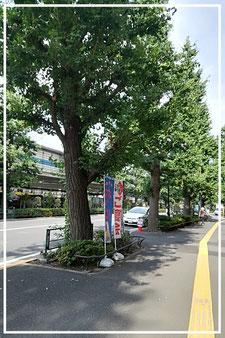 むつみ会から千駄ヶ谷駅へ(夏)