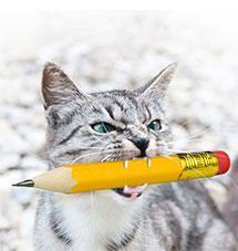 Katze mit Bleistift, Ateliertiger in Perchtoldsdorf, Bildbearbeitung